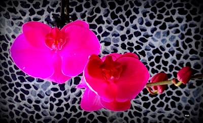 Photograph - My Orchids For Mother's Day 2018 by VIVA Anderson