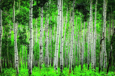 Photograph - My Own Emerald Forest by Rick Furmanek