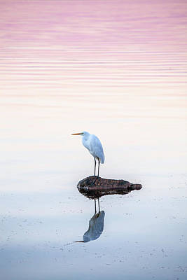 Of Birds Photograph - My Own Private Island by Az Jackson