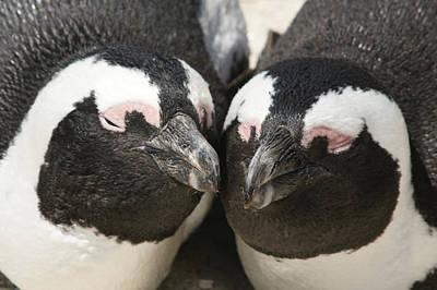 Photograph - My Penguin Valentine by Brandy Herren