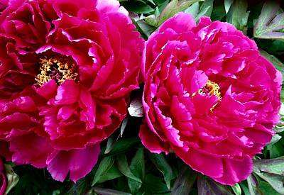 Photograph - My Pretty Peonies by Bruce Bley