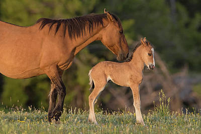 Washakie Photograph - My Pretty Pony by Sandy Sisti