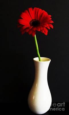 Gerber Daisy Photograph - My Red Gerber by Marsha Heiken