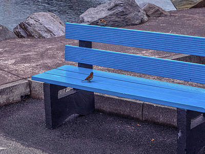 Photograph - My Seat.  by Leif Sohlman