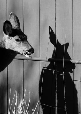Photograph - My Shadow by I'ina Van Lawick
