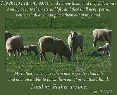 My Sheep Hear My Voice Art Print
