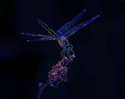 Photograph - My Shining Moment Dragonfly Art by Lesa Fine