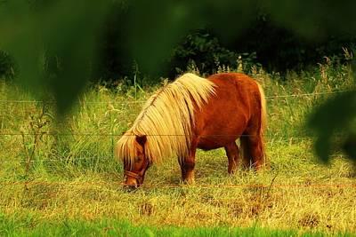 My Little Pony Photograph - My Simple Life.  by Rusalka Koroleva