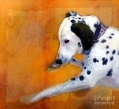 Photograph - My Sleeping Dalmatian by Judi Bagwell