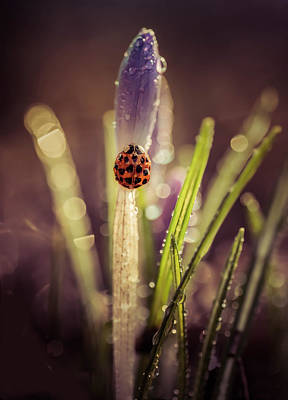 Photograph - My Small Garden In The Morning Rain by Jaroslaw Blaminsky