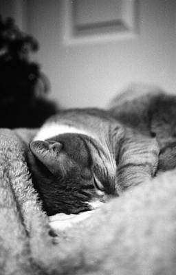 Photograph - My Snuggle Bug by Teri Schuster