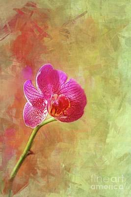 Photograph - My Special Orchid by Judi Bagwell