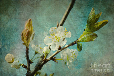 My Springtime Art Print by Angela Doelling AD DESIGN Photo and PhotoArt