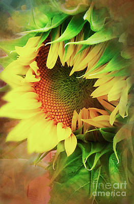 Photograph - My Sunshine by Janie Johnson