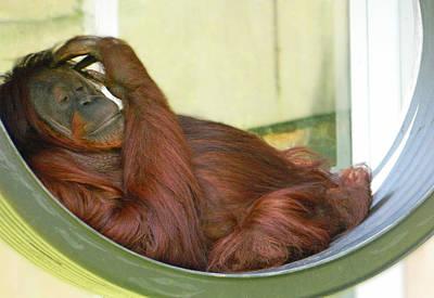 Orangutan Digital Art - My Thinking Place by Emmy Marie Vickers