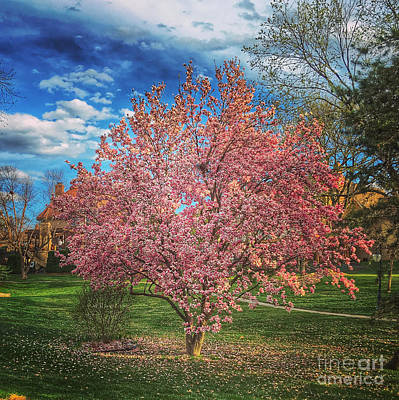 Photograph - My Tree by Bob Brents
