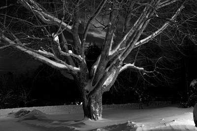 Art Print featuring the photograph My Tree by Greg DeBeck