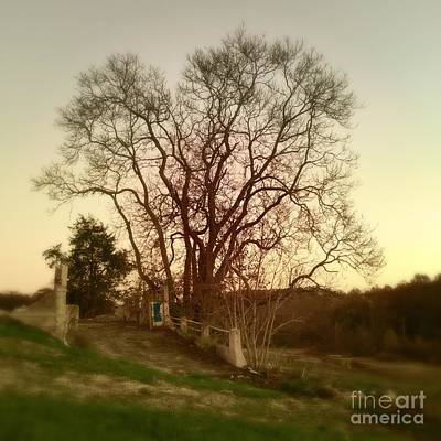Photograph - My Tree Has A Soul  by Delona Seserman