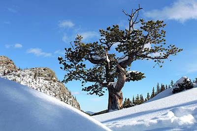 Photograph - My Tree by Silke Brubaker