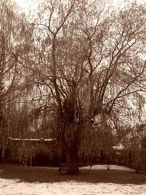 Photograph - My Tree This Morning by Michael Canning