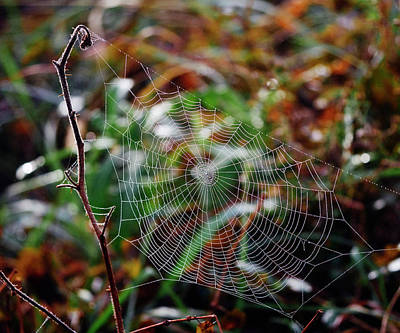 Photograph - My Web by Paul Ross