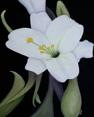 My White Lily Art Print by Mary Gaines