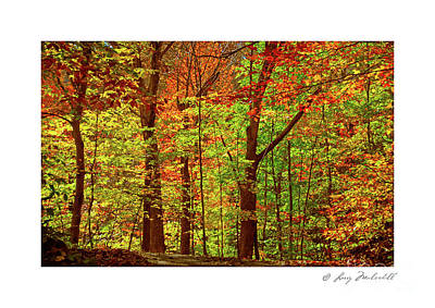 Photograph - My Woodlands Ver 4 by Larry Mulvehill