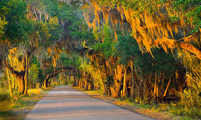 Photograph - Myakka Canopy Road At Sunset by John Myers