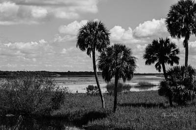 Photograph - Myakka Palms by Susan Molnar