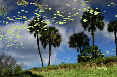 Photograph - Myakka Reflections by Susan Molnar