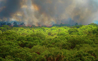 Photograph - Myakka River Burn by Tom Singleton