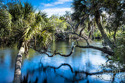 Photograph - Myakka River Florida by Ben Graham