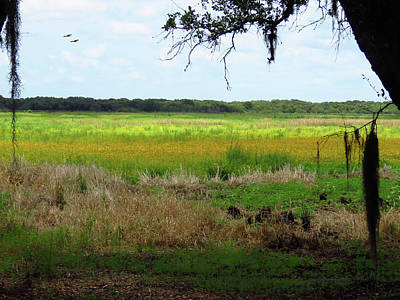 Photograph - Myakka Scenic by Rosalie Scanlon