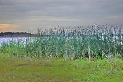 Photograph - Myakka Tall Reeds by Florene Welebny