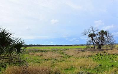 Photograph - Myakka Wetlands by Florene Welebny