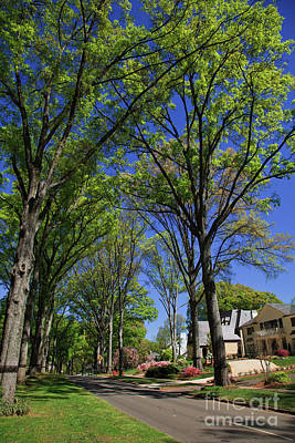 Photograph - Myers Park In Charlotte by Jill Lang