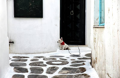 Mykonos Guard Dog Art Print