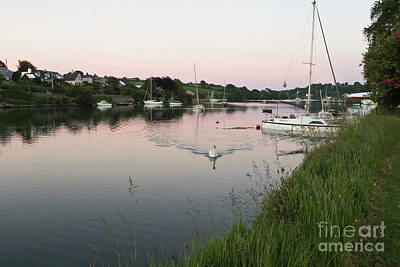 Photograph - Mylor Bridge Swan At Sunset by Terri Waters