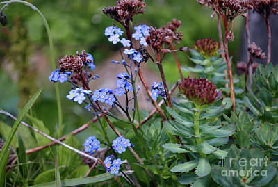 Photograph - Myosotis by Michelle Meenawong