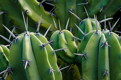 Photograph - Myrtillocactus Close-up by Rob Huntley