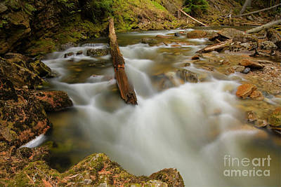 Photograph - Myrtle Creek by Idaho Scenic Images Linda Lantzy