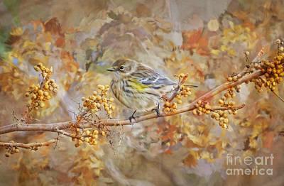 Warbler Digital Art - Myrtle Warbler by Suzanne Handel