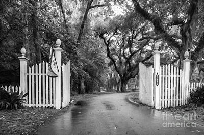Photograph - Myrtle's Plantation Gates-charcoal by Kathleen K Parker