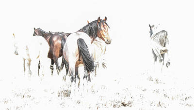 Photograph - Mysteries Of A Mustang A by Angelique Rea