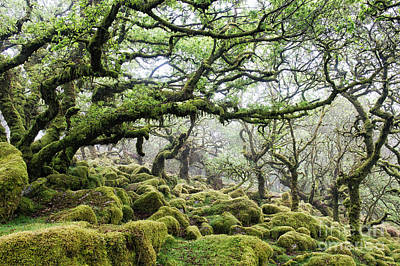 Mysterious Ancient Woodland Print by Tim Gainey