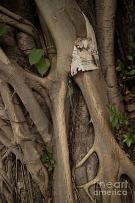 Photograph - Mysterious Asian Tree Roots Detail Vertical by Jason Rosette