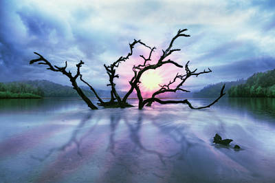 Driftwood Beach Fog Wall Art - Photograph - Mysterious Dawn by Debra and Dave Vanderlaan