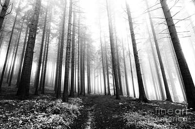 Mysterious Forest Art Print by Michal Boubin