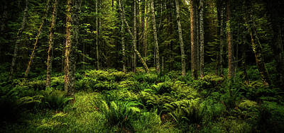 Photograph - Mysterious Forest by TL Mair