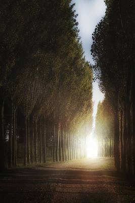 Autumn Scene Photograph - Mysterious Light by Joana Kruse